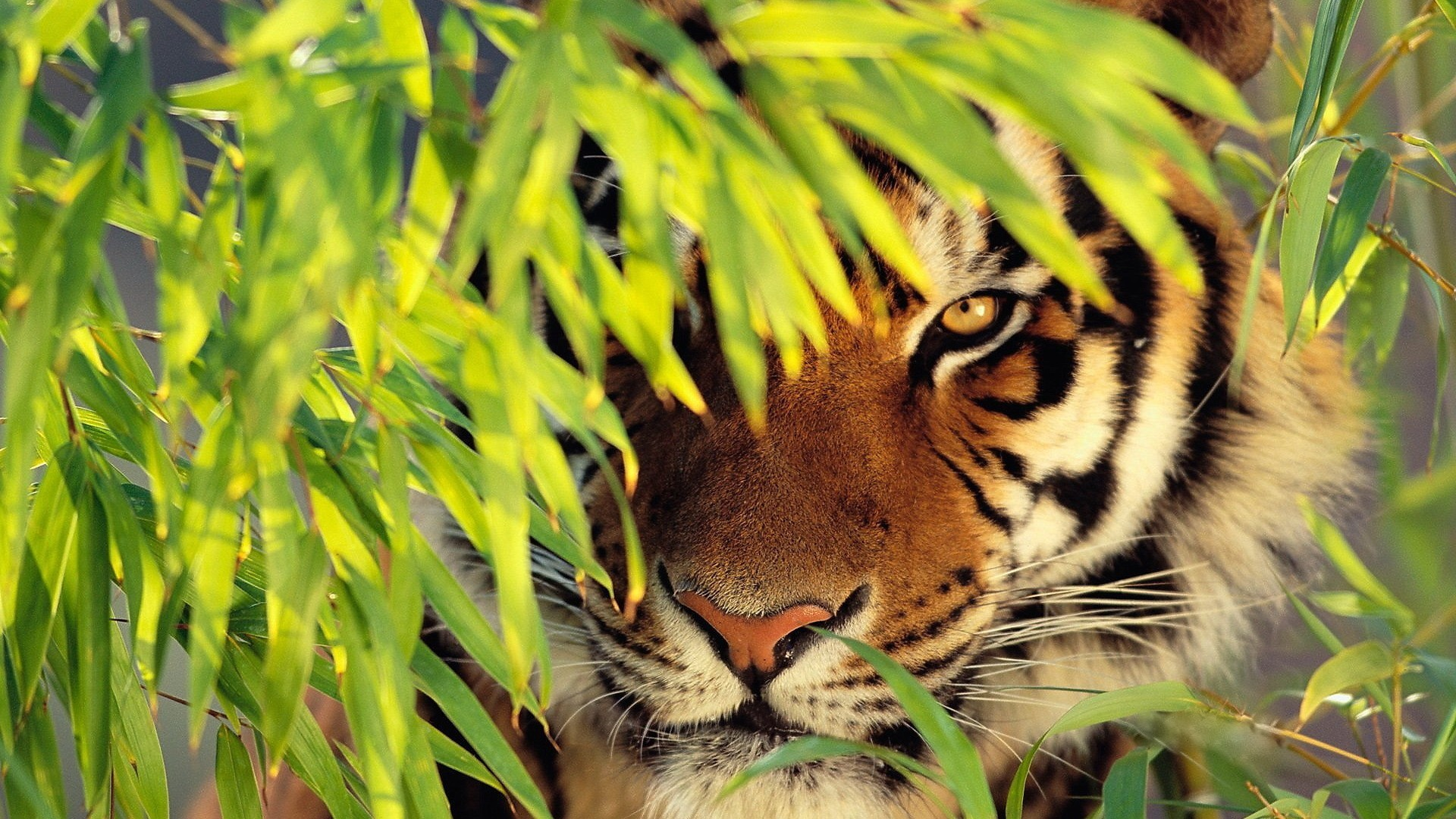 05_tiger_may