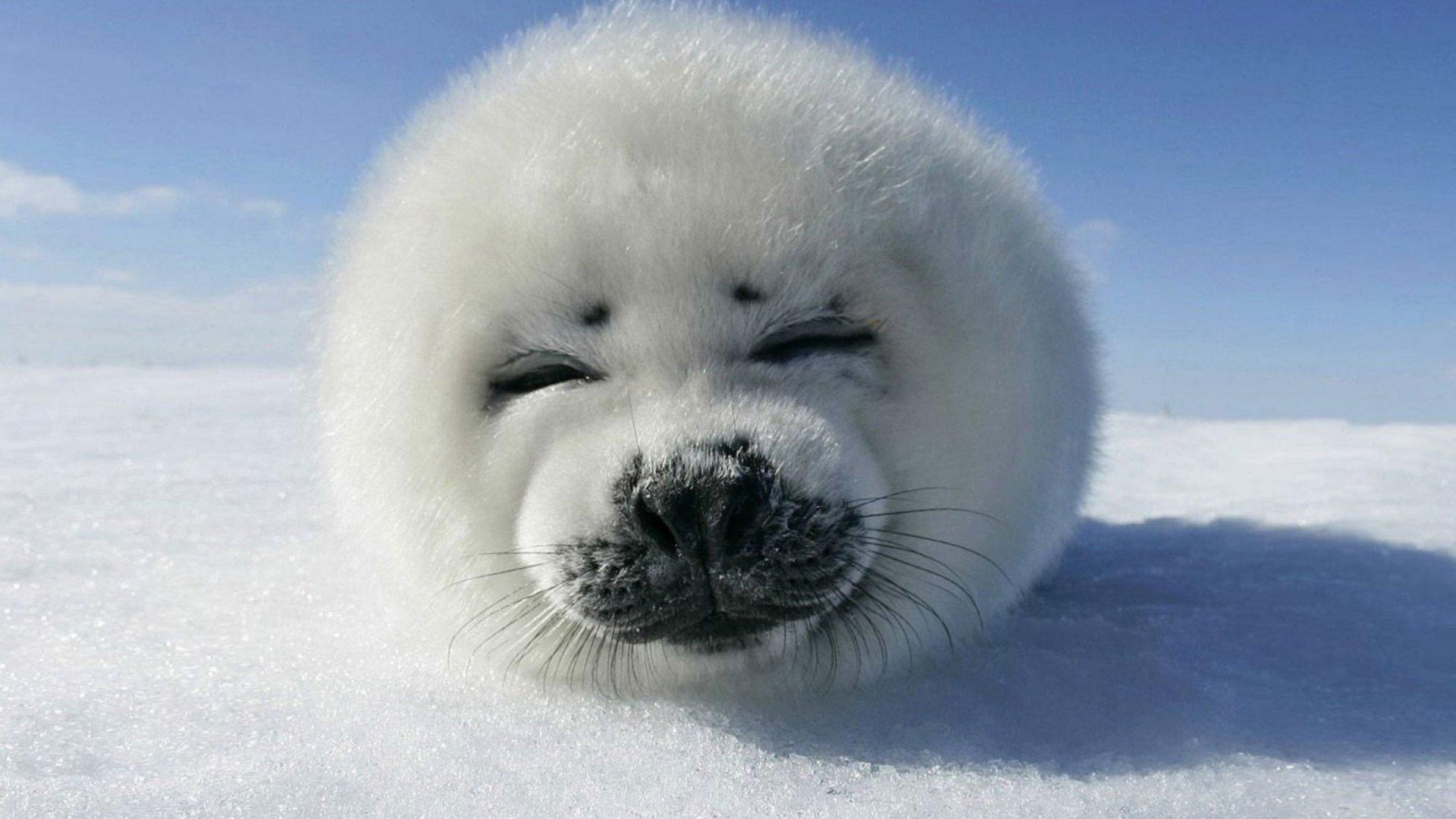 12_seal_decembre