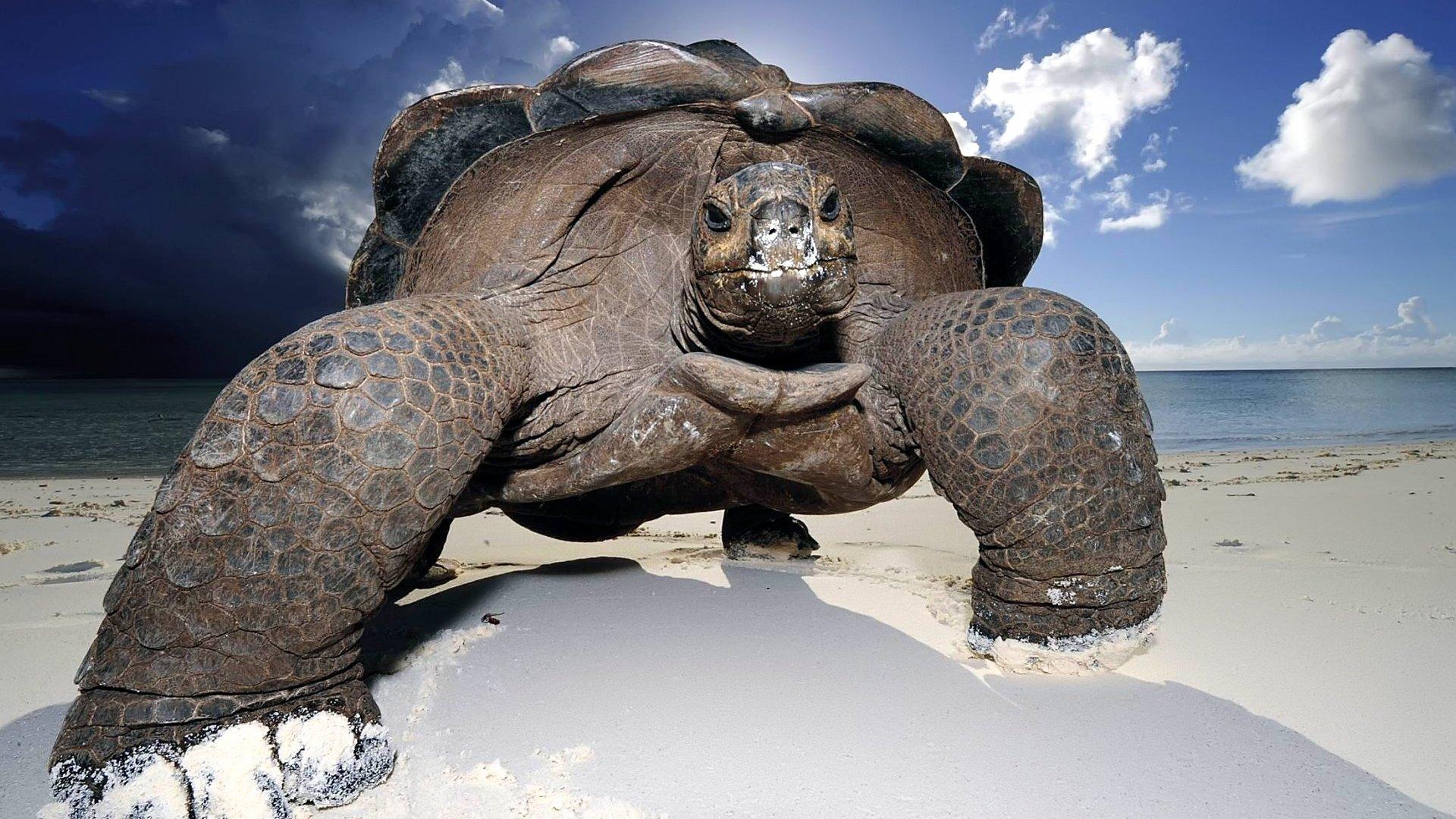 07_turtle_july
