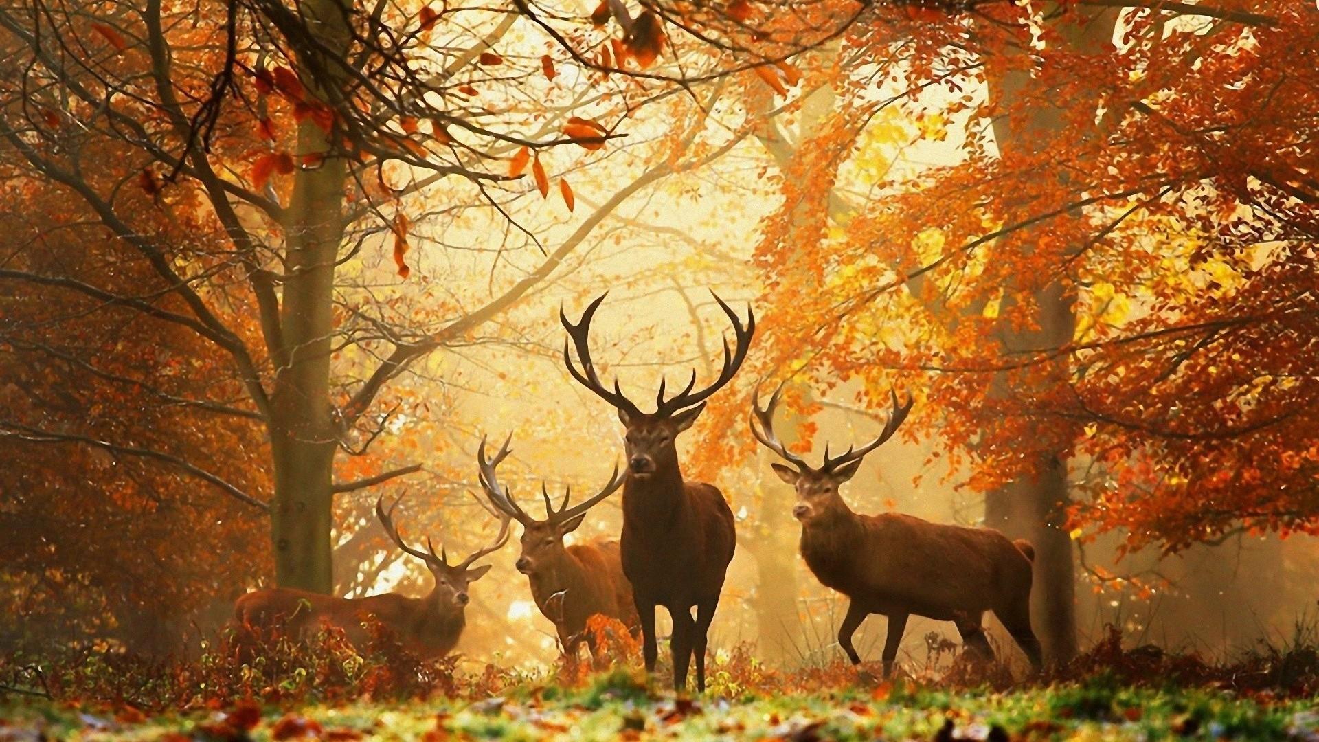 11_deer_november