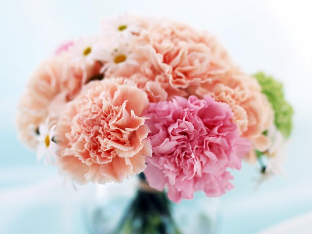 Красивый цветок – здоровый цветок