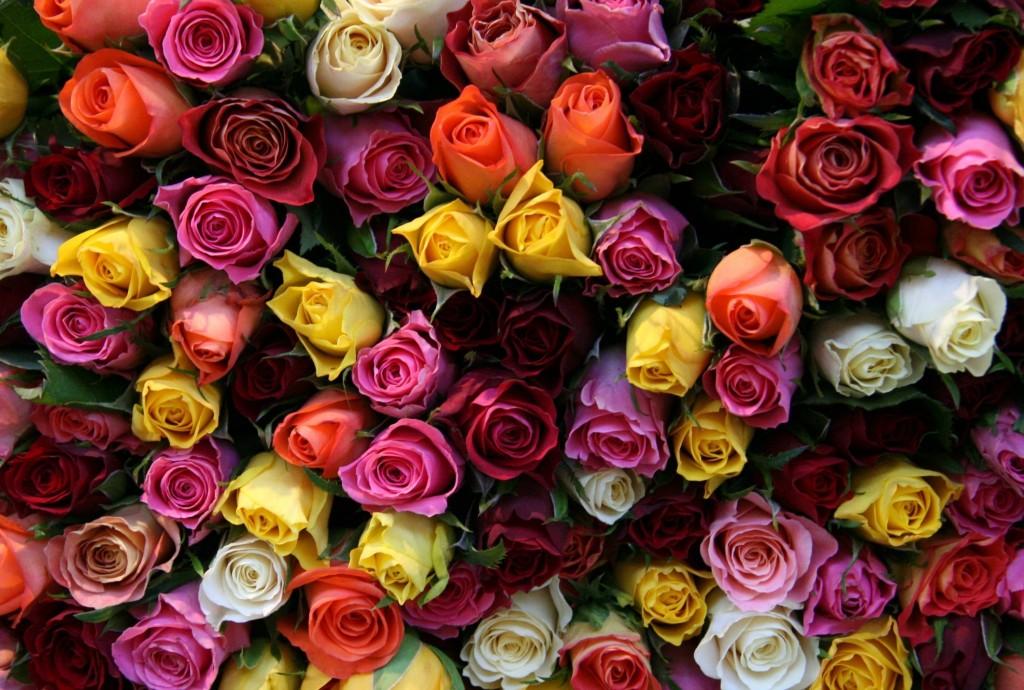 Советы по выбору свежих цветов