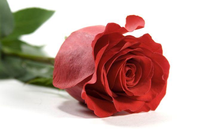 одна роза это стильно_1